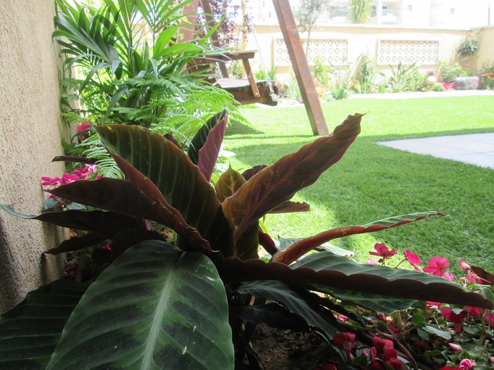 עיצוב עם צמחים של צל הוא חובה