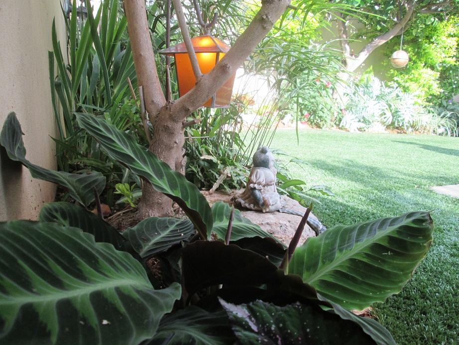 התאמת צמחים למקומות מוצלים