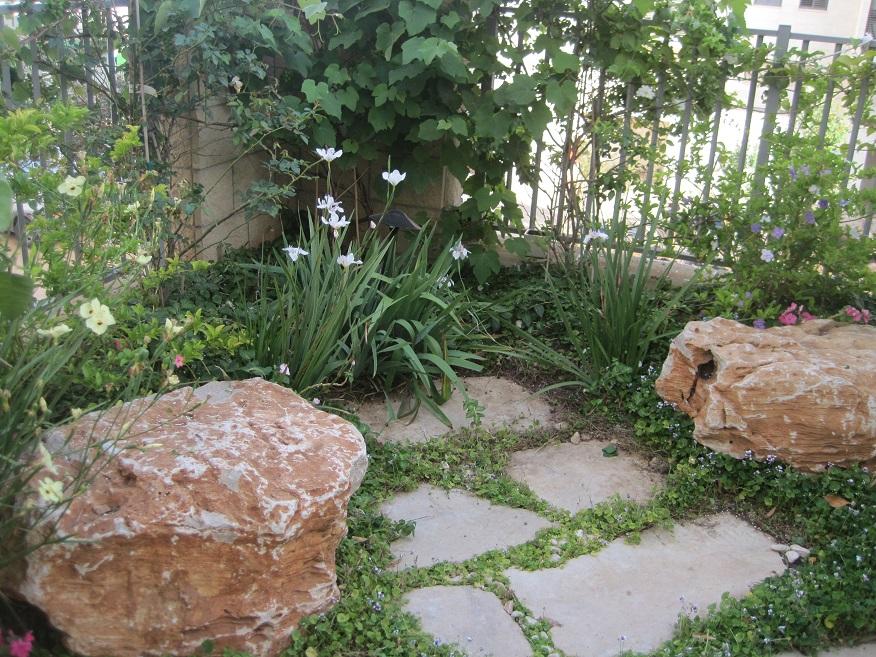 עיצוב גינה לדירת גן בכפר סבא