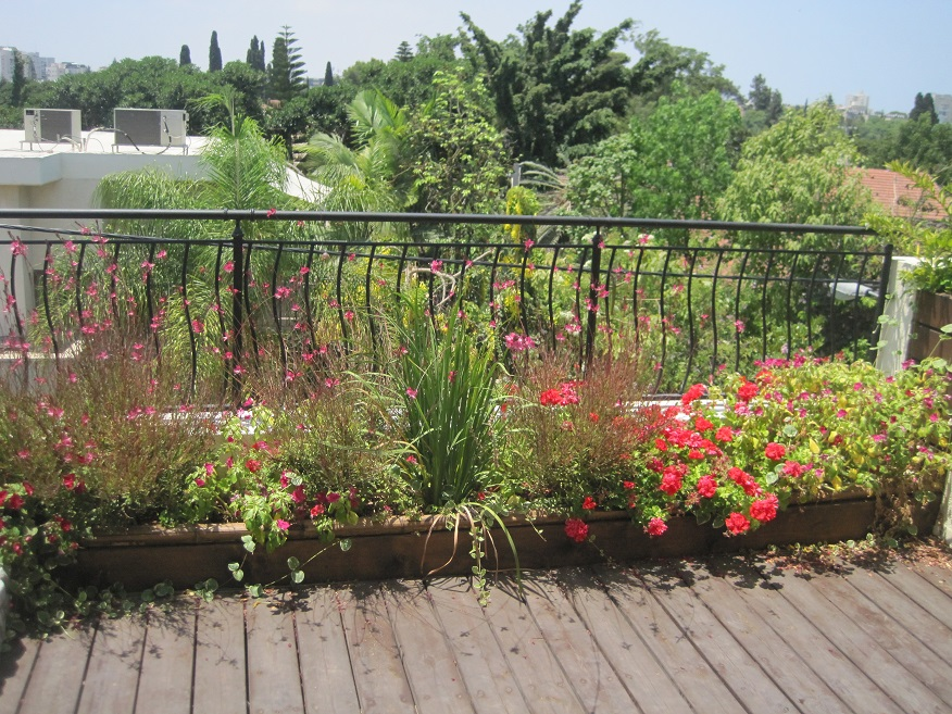 גינת גג רמת גן 2013