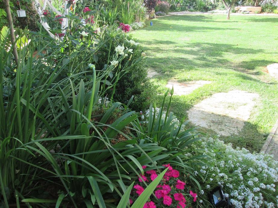 בושמת סלסלי כסף ומבט אל הגינה