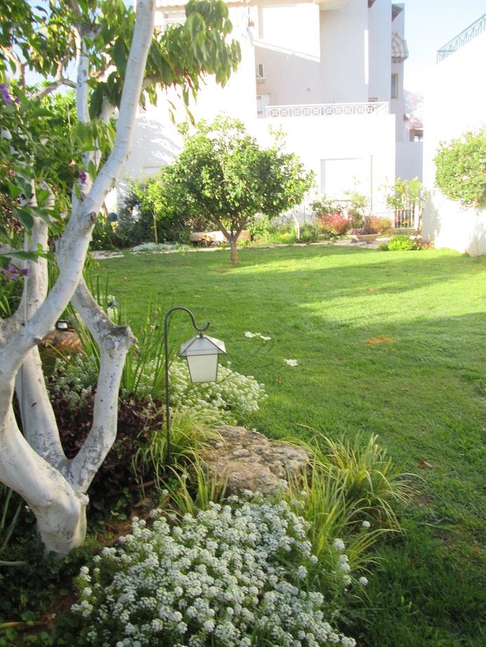 עץ ליצי בעלייה מהחוץ לכניסה לגינה
