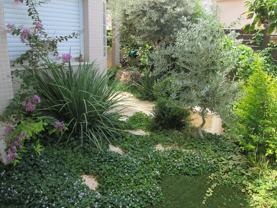 הקמות גינות עם דשא סינתטי מראה פראי וטבעי