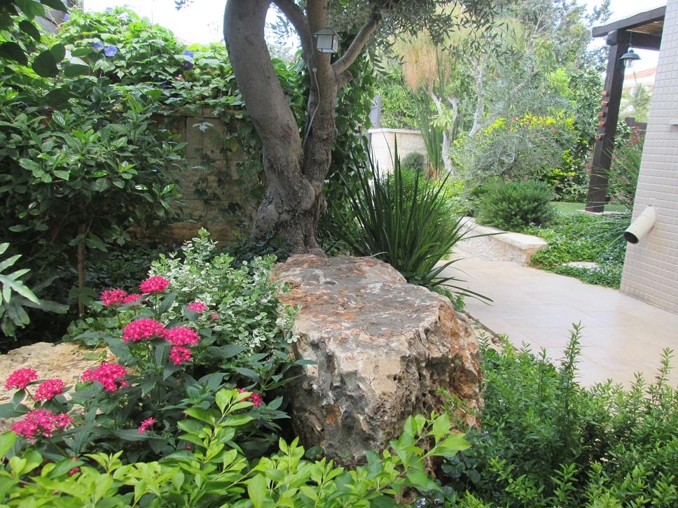 תמונה כללית של עיצוב והקמת הגינה הקטנה באבן יהודה