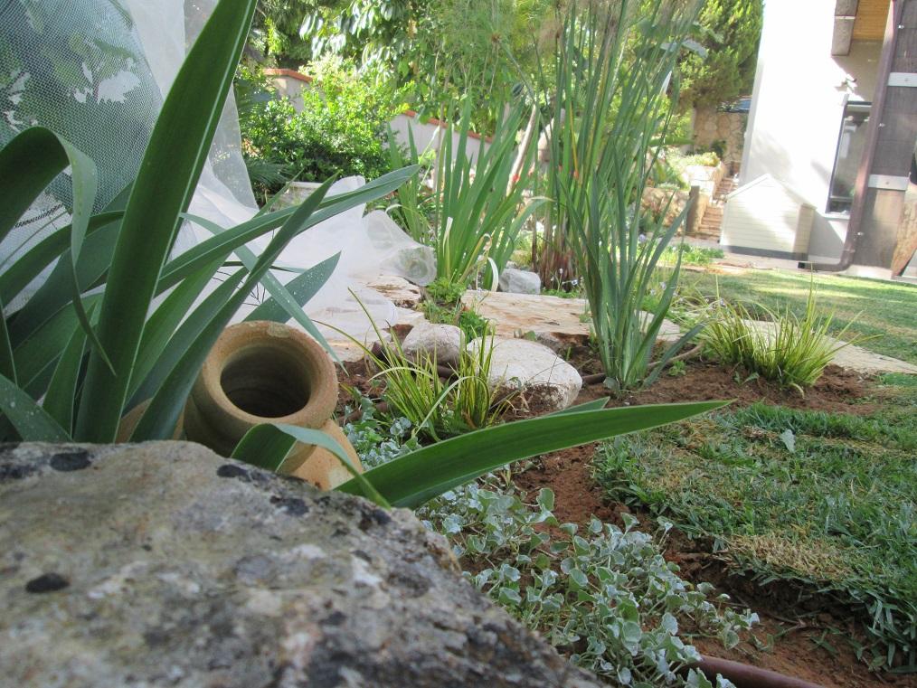 קו הדשא המתעגל אל בין הצמחים האפור זוהי דיכונרה זוחלת