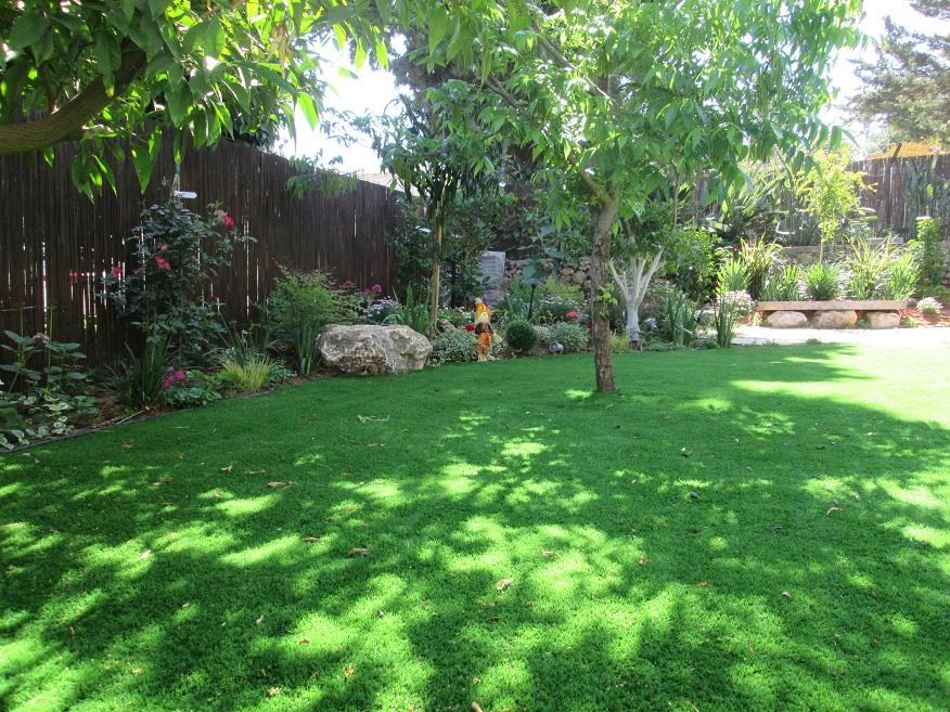 דשא עוטף את עץ הפקאן שהיה עץ קיים בגינה כשהגעתי והחלטתי לללכת על קו שמשאיר עצים בדשא עד אליהם