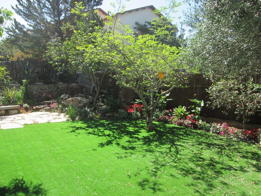 הדשא עוטף גם את עץ האנונה