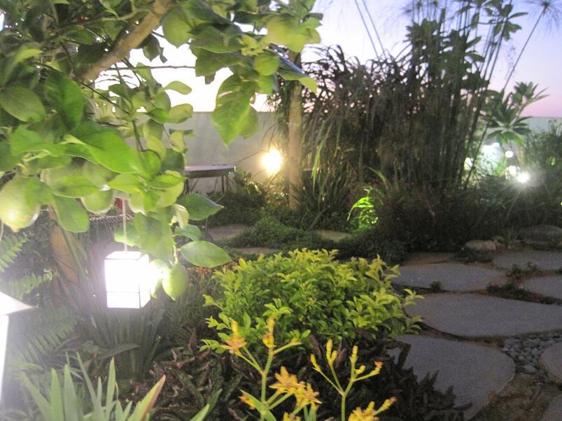 הצמח הקרוב הוא בלמקנדה לאחריו אדום למטה הימיגרפיס ולאחרין דורנטה תאילנדית