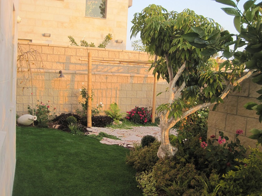 עץ ליצי ודשא מתחבר לעיצוב הגינה