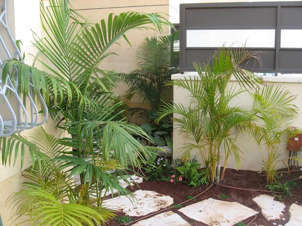 מבט מאזור המחסן המוצל מעוצב בצמחי צל כגון אוזן הפיל ושרך יער ווסטר קינג