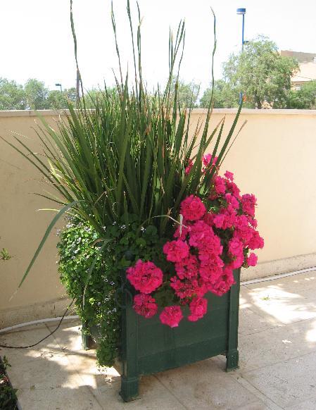 צמחים מיוחדים ושונים לצד חומת הבית היפה