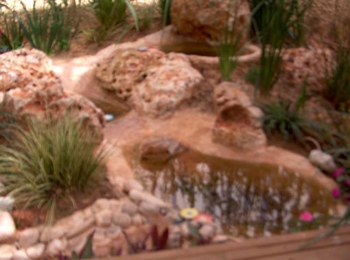 אביזרים נוספים שהם חובה בבריכות זה מסנן ביולוגי ומנורת uv קוטלת אצות.