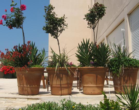עציצים עם פרחים שונים המתאימים לסגנון חצר הבית