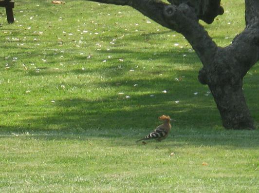 בעלי חיים שונים נהנים להיות בסביבת הדשא הירוק