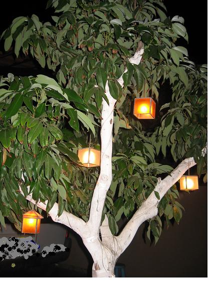 עץ ליצי עם גופי תאורה 12v משרה אוירה טובה בלילה