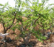 עצים בינוניים