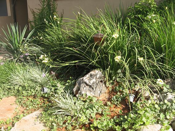 סלע יוצר עיצוב צמחים