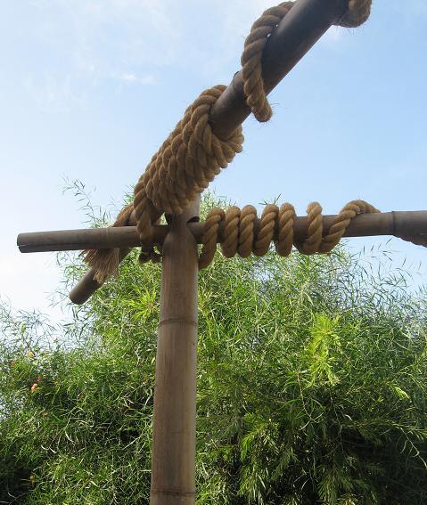 במבוק לצמח פינתי מטפס