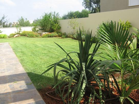 צמחייה יפה לצד הדשא והריצוף