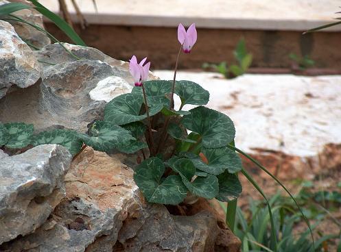 שימוש באבן 2006