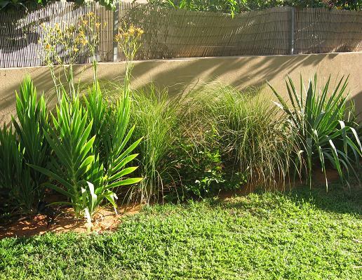מקטע בגינה עם צמחים עשבוניים