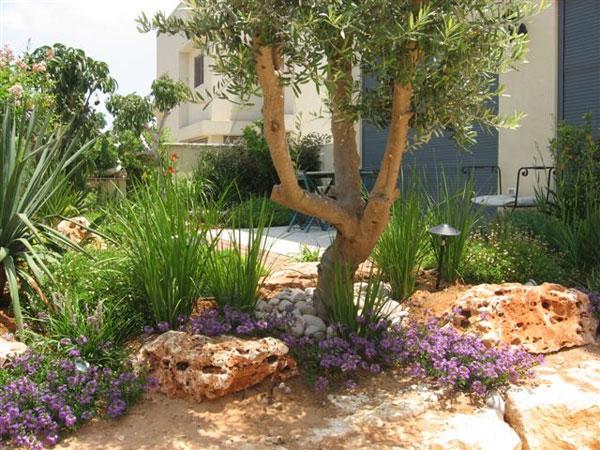 הגינה של ברוריה 2007