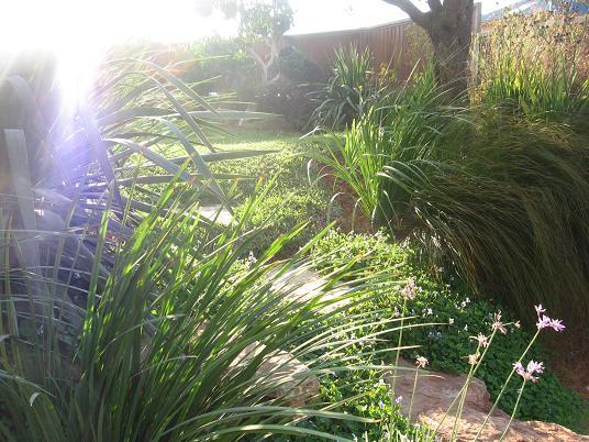 לראות את הדשא דרך חלק של צמחייה יוצר הזמנה