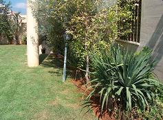 דרצנה דרקו צמח אוסטרלי