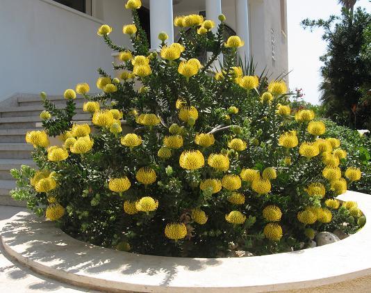 פרחים צבעוניים משתלבים עם המראה המפואר של הכניסה לבית