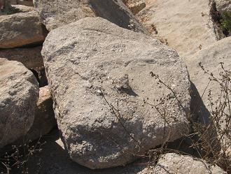 סלע חוף ים גדול מלא צדפים