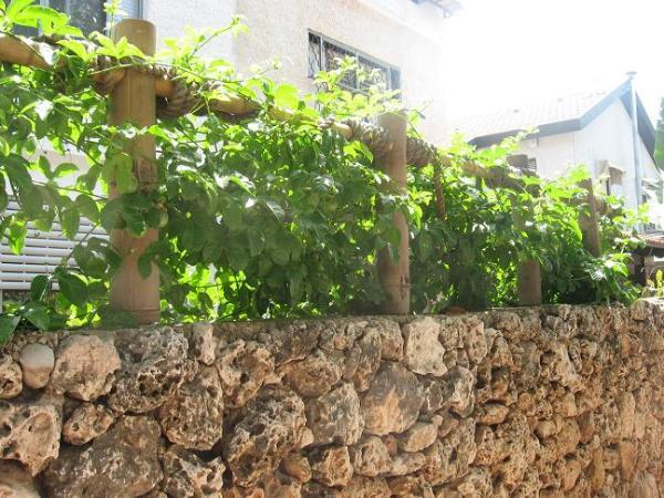 גדר במבוק שחור דגם קיוטו