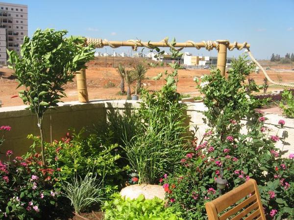 התחלת טיפוס הצמחים על הגדר