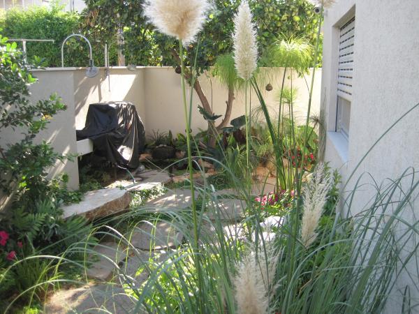 קורטדריה מכסיפה צמח עם אופי מימי