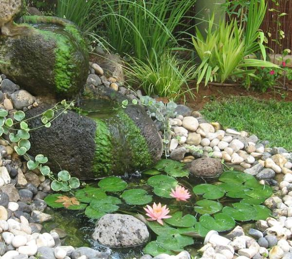 ירוקת ואצות חוטיות כחלק מהמראה היפה