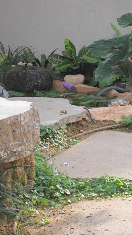מבט אל הברכה לצד הספסל אבן טבעית