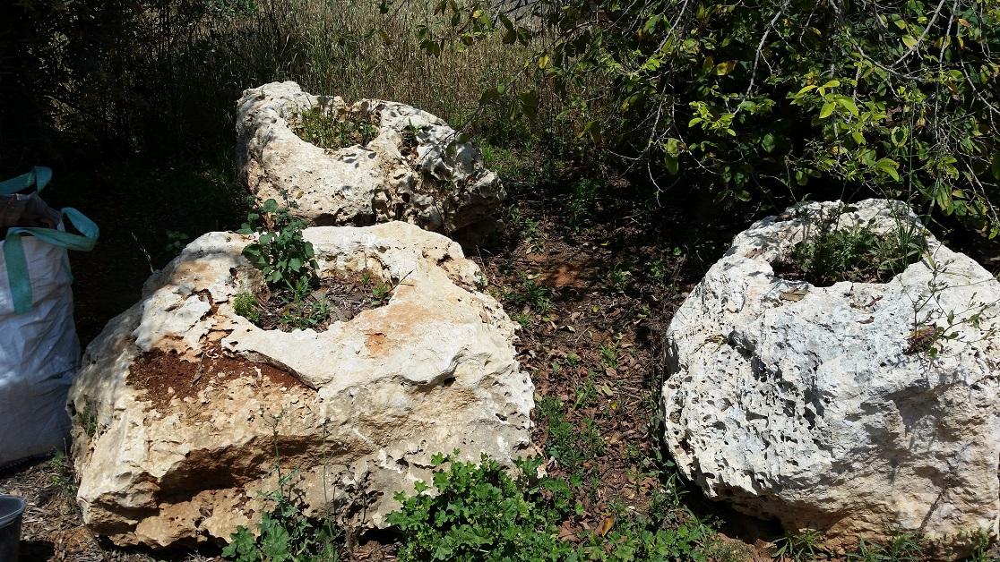סלעים עם חור לשתילות עץ זית