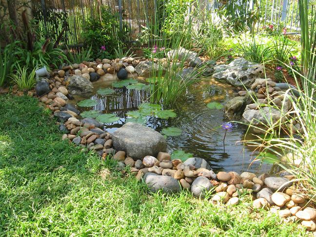 בריכת נוי תורמת לכלל עיצוב הגינה גם בזכות הצמחיה עם האופי המימי