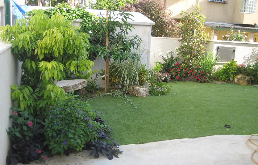 דשא עליון פתור עם צמחיה יוצרת מראה טבעי של עיצוב גינה