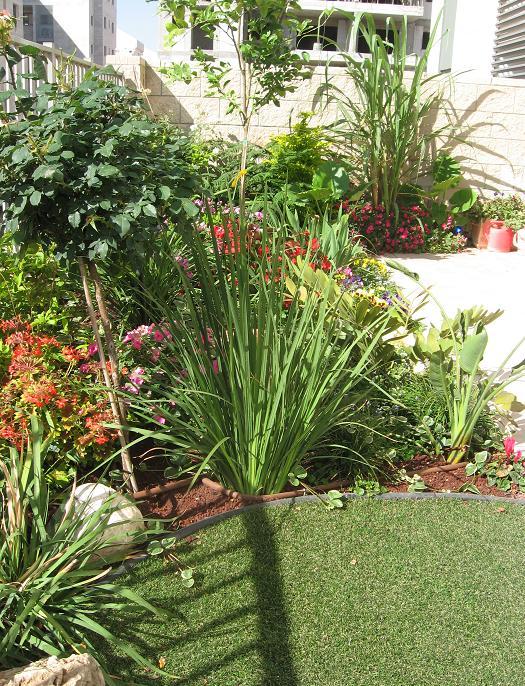 עיצוב פרחים וצמחי נוי
