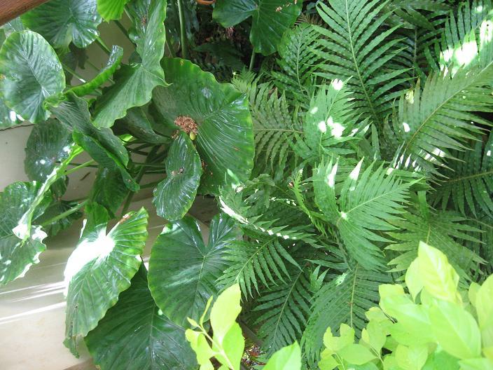 שרכים צמחי הבית וצמחי צל במבט
