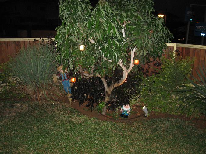 עץ לצי הובא על ידי מנוף