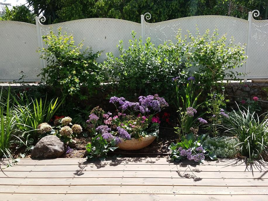 כד וצמחיה מול החלון של הסלון