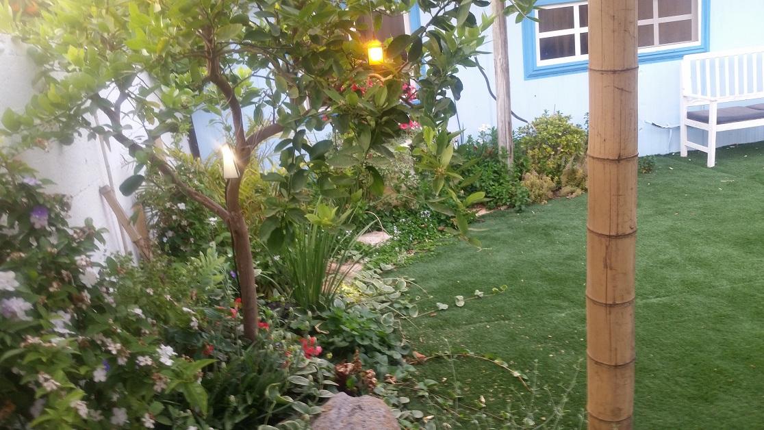 עץ לימון מקושט בתאורה