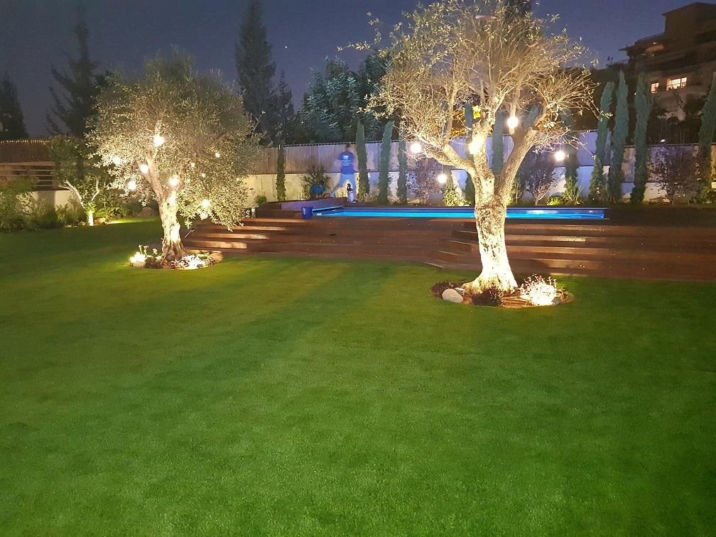 עצי זית עתיקים עם תאורת 12 וולט