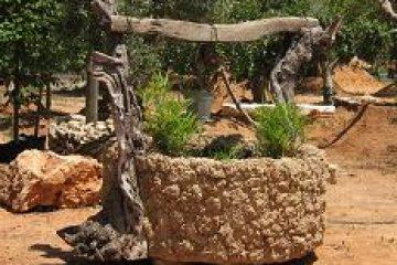 באר שוקת ועץ בסלע