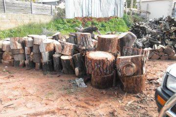 עצים, גזעים להסקה