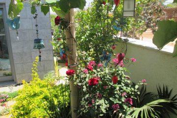 דירת גן רוני רעננה לאחר שנה